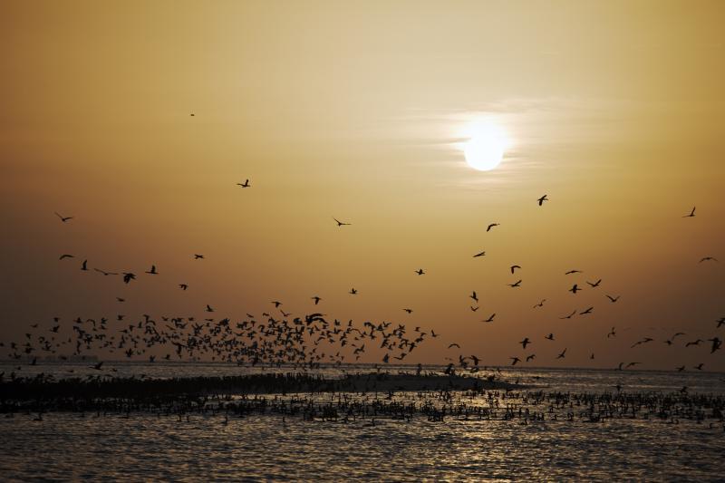 Cormoranes en la Isla Sir Bani Yas