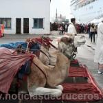 Camellos en el Puerto de La Goulette - Túnez