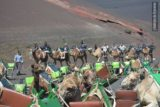 caravana de dromedarios