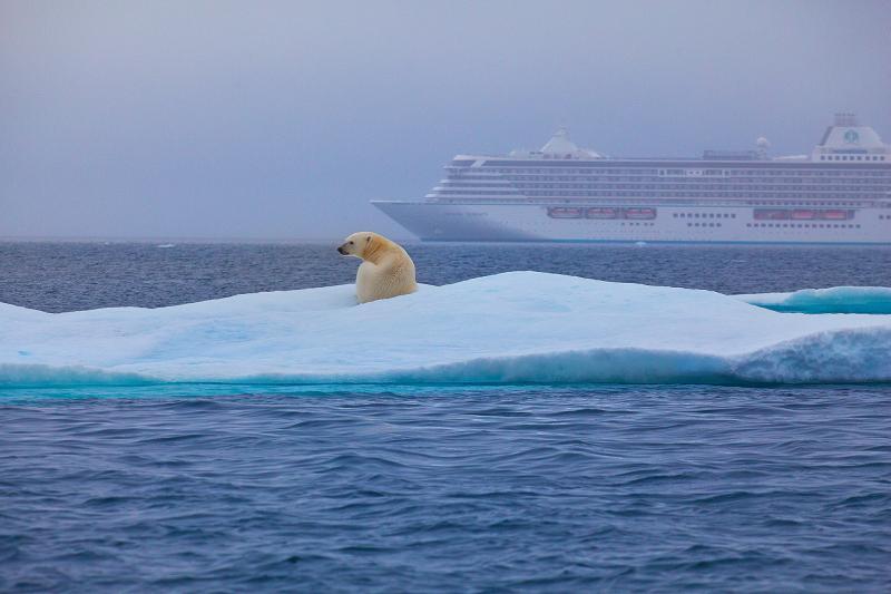 Oso Polar en el Pasaje Noroeste (Credit- Neil Roberts, Paragon Pixels)